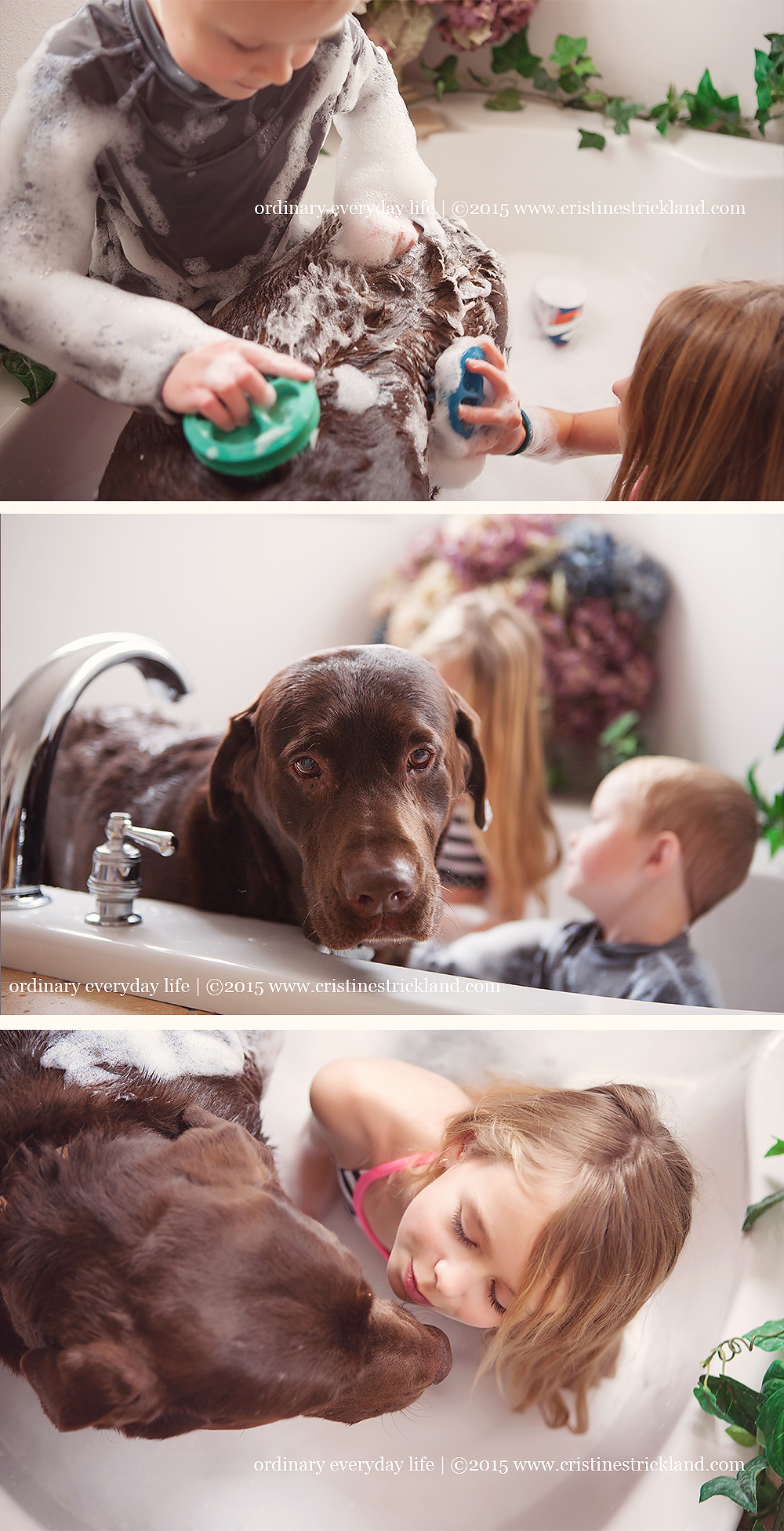 labrador gets a bath lifestyle dog photography